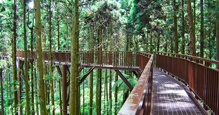 挑高木棧橋!絕美森林空中步道宛如仙境 -- MOOK景點家