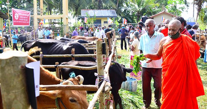 靈鷲山水陸法會12月啟建 斯里蘭卡護生108頭牛